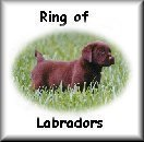 Click tojoin the ring of Labrador Retrievers
